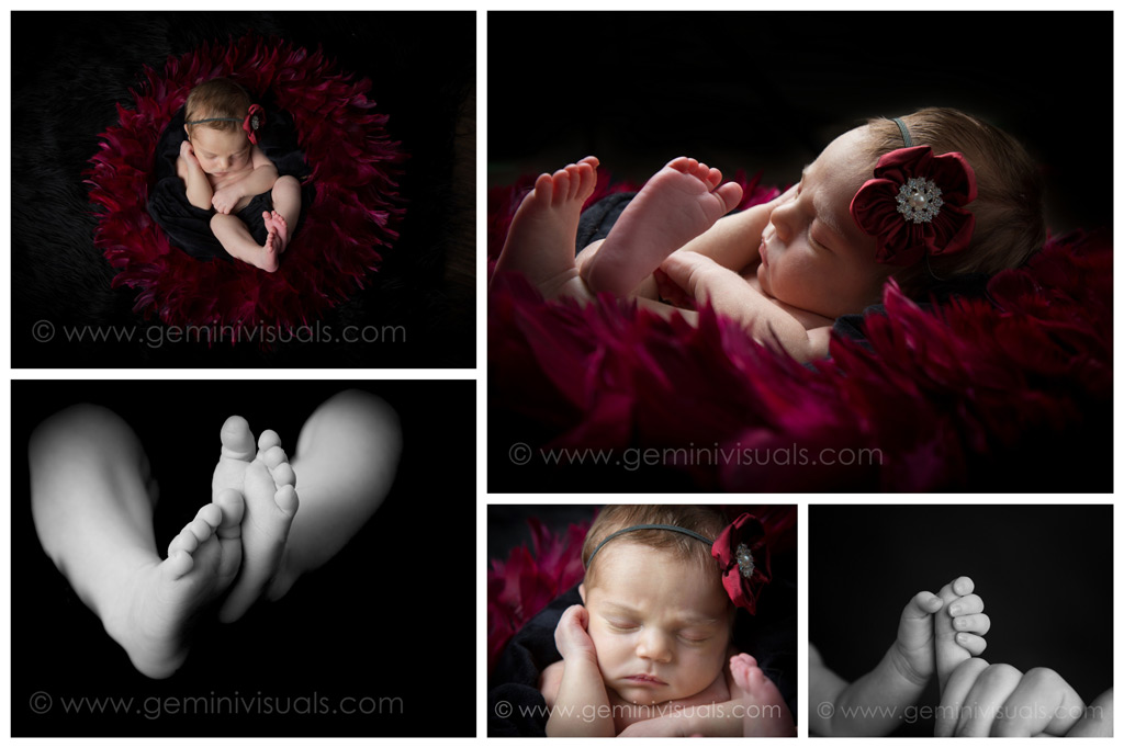 newborn photography white rock red feathers nest